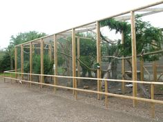 Image detail for -New Pheasant Aviaries at Wingham WP, 31/07/10 » Wingham Wildlife Park ...