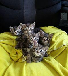 #KittyLitter ;)
