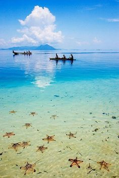 I could picture myself here easily. Wow, look at those star fish in the foreground, and that beautiful blue sea.  Borneo, Indonesia