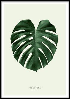 Green monstera (21x30cm) i gruppen Posters och prints / Storlekar / 30x40cm hos Desenio AB (8147-4)
