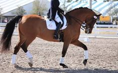 Image result for dressage horse