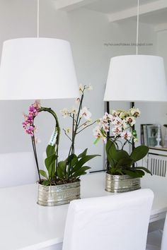 tipps orchideen pflege lila kies schalen orchideen pinterest. Black Bedroom Furniture Sets. Home Design Ideas