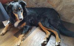 Dog Adoption Shelters Near Toronto
