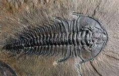 Trilobite-the best memories I have are looking for trilobites with my mom