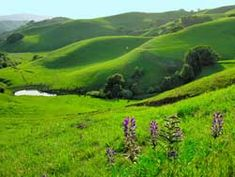 the view from briones park, bay area.