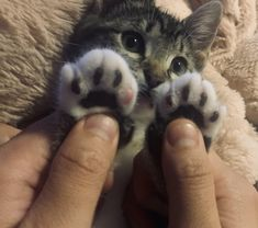 Cute Baby Cats, Cute Little Animals, Kittens Cutest, Cats And Kittens, Animals And Pets, Funny Animals, Gato Gif, Photo Chat, Cat Aesthetic