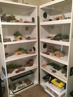 Image result for leopard gecko shelves