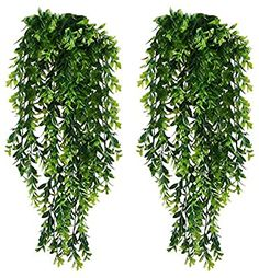 KingYH 2 Pack Artificial Hanging Vines Plants Plastic Fake Trailing Weeping Ivy Vine Greenery Drooping Plant for Wall Indoor Outside Garden Wedding Hanging Pot Basket Decoration Ivy Plants, Fake Plants, Green Plants, Artificial Plants, Fern Plant, Plant Wall, Plant Decor, Ivy Plant Indoor, Vine Wall