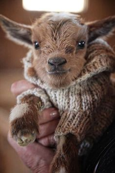 24 Cutest Animal Pictures Guaranteed to Make You Smile Today - JustViral.Net - 24 Cutest Animal Pictures Guaranteed to Make You Smile Today – JustViral. Baby Animals Super Cute, Cute Little Animals, Cute Funny Animals, Funny Dogs, Baby Animals Pictures, Cute Animal Photos, Animals And Pets, Animal Pics, Smiling Animals