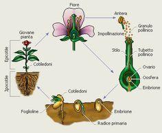 U.D. La riproduzione delle piante: dal seme alla pianta
