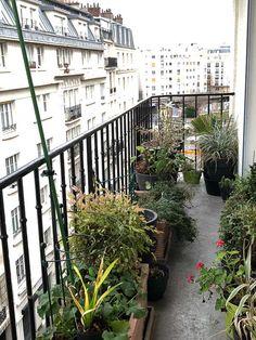 Balcon nettoyé et rangé #hiver #Paris http://www.pariscotejardin.fr/2017/12/balcon-nettoye-et-range/