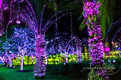 christmas lights on trees - Google Search