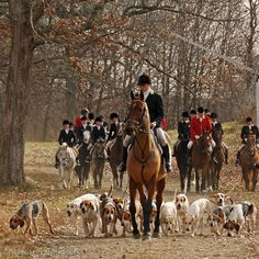 The redcoats are coming...run fox, run.