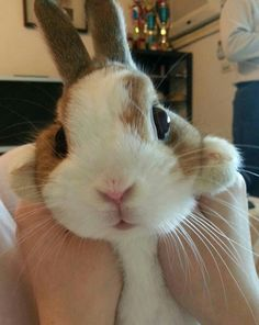 look. at. this. fluffy. bunny.