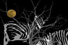 Zebra Moon - Fine Art prints