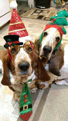 Two Tunny Christmas Basset Hound Dogs Cute Puppies, Cute Dogs, Dogs And Puppies, Doggies, Christmas Animals, Christmas Dog, Merry Christmas, Dog Lover Gifts, Dog Lovers