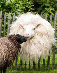 kiss  . . .  Did the Lion lay down with the sheep? And where are the legs on that sheep? And the rest of it's body?
