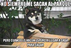 Típico de los perros        Gracias a http://www.cuantocabron.com/   Si quieres leer la noticia completa visita: http://www.estoy-aburrido.com/tipico-de-los-perros/