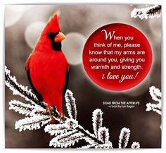 The cardinal was my mom's favorite bird. Miss My Mom, Mom And Dad, Signs From Heaven, Bird Quotes, Bird Sayings, Angel Quotes, Son Quotes, Cardinal Birds, Cardinal Meaning