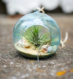 tendance de déco de salon avec terrarium à sable et thème bord de mer