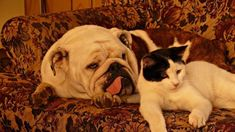 Wallpapers * Baggy Bulldogs Bulldog Wallpaper, French Bulldog, English Bulldogs, Wallpapers, Animals, Puppies, Animales, Cubs, Animaux