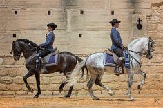 RENCOROSO VII & ODALISCO III Owner: Yeguada de La Cartuja, Spain ©Azahara Photography 2017