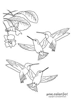 Hummingbirds | Print. Color. Fun! Free printables, coloring pages, crafts, puzzles & cards to print