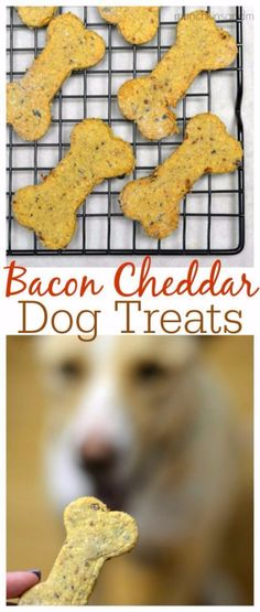 DIY Pet Recipes For Treats and Food - Bacon Cheddar Homemade Dog Treats - Dogs, Cats and Puppies Will Love These Homemade Products and Healthy Recipe Ideas - Peanut Butter, Gluten Free, Grain Free - How To Make Home made Dog and Cat Food - diyjoy.c