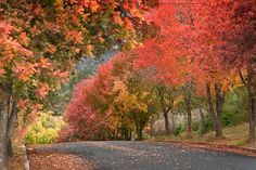 Autumn in Armidale, New South Wales