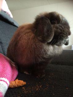 Lovely rabbit Guusje!