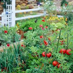"""Cherry Tomatoes with Red Poppies in the Background from """"Vegetable Gardens That Look Great"""" by Better Homes & Gardens"""