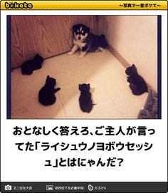 Animals And Pets, Funny Animals, Cute Animals, Make You Smile, Funny Photos, Neko, Cats And Kittens, Dog Cat, Kitty