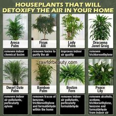 Plants that help to clean the air in your home.  They help oxygenate the air, while also removing toxins.