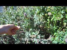 Jedlé rostliny - podrobný přehled - Slunečný život