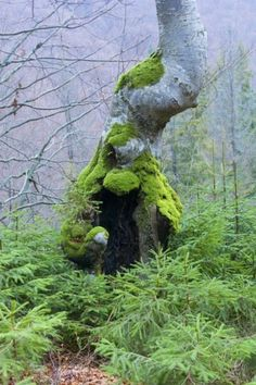 The lovely feel of moss