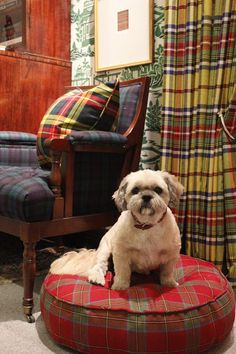 "Dog looks just like Wicket! the adventures of tartanscot™: ""Design Inspiration - Ryder Tartan . . . . """