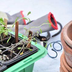 Velkommen til Urban Garden Company Grow Your Own, Instagram Images, Instagram Posts, Urban, Garden, Blog, Inspiration, Link, Biblical Inspiration