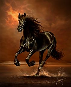 Welcome to my Workspace Most Beautiful Horses, All The Pretty Horses, Animals Beautiful, Horse Photos, Horse Pictures, Horse Wall Art, Black Stallion, Running Horses, Black Horses