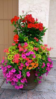 Una buena idea plantar diferentes tipos de flores... un arreglo floral viviente.