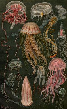 Alexander Theodor von Middendorff, Aufzählung und Beschreibung der zur Meersfauna Russlands gehörigen Einschaler, 1894.