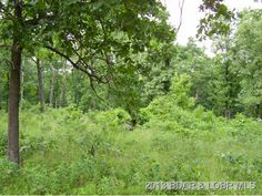 Nice level Building Lot. Subdivision has private Lake for lot owners. Water and Electric available. Private lot with lots of trees in Macks Creek MO