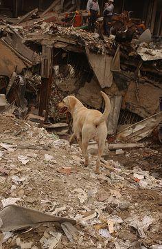FEMA 5620 (9-11 SAR Dogs)...little heroes