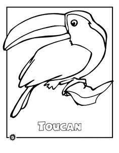 Rainforest Animals Coloring Pages 3