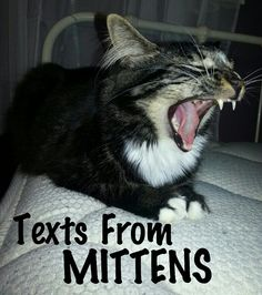 Texts From Mittens - text messages from a precocious kitty named Mittens to and from his owner (the woman who puts up with Mittens's antics).