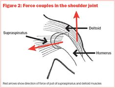 Supraspinatus: Anatomy and Biomechanics - HealthnPhysio Rotator Cuff Strengthening, Sports Therapy, Shoulder Joint, Scapula, Shoulder Injuries, Major Muscles, Palm, Study, Range