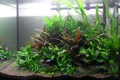 The Soil Substrate Planted Tank - a How to Guide... http://www.aquascapingworld.com/threads/the-soil-substrate-planted-tank-a-how-to-guide.8217/