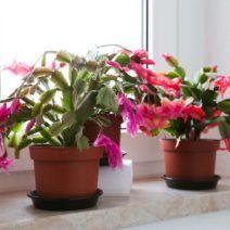 Zimmerpflanzen Für Dunkle Standorte zimmerpflanzen für dunkle standorte geeignet http cooledeko de