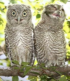 You know your outfit looks ridiculous when the owls laugh at you