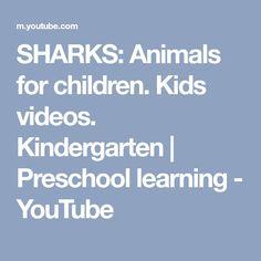 SHARKS: Animals for children. Kids videos. Kindergarten | Preschool learning - YouTube