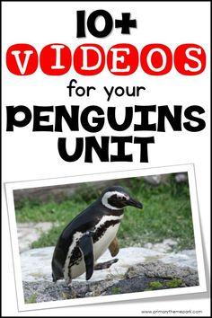 Penguin Videos for K